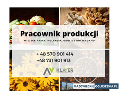 Pakowanie kwiatów/sortowanie warzyw -Holandia- praca na min.3 miesiące