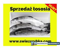 Sprzedaż łososia polskiego hurt