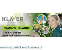 Oferta krótkoterminowa 4 tygodnie - posezonowe porządki w szklarni- Holandia