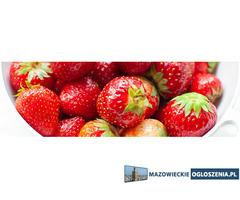 Praca przy zbiorze truskawek i borówek 200-400 zł dniówka 576123593